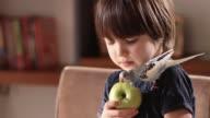 istock Child and Budgerigar 1220643963
