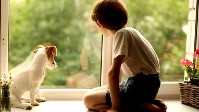 child and his puppy friend looks out the window. - bambino cane video stock e b–roll