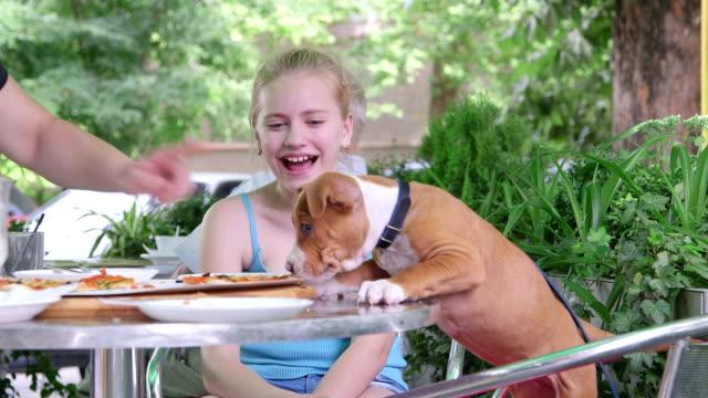 vídeos de stock e filmes b-roll de criança e cachorrinho comer pizza no restaurante de fast food ao ar livre - bar local de entretenimento