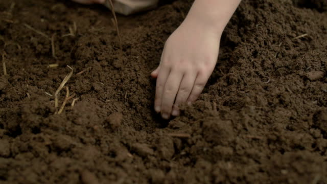 Child Farmer Young Girl's hand Planting Garden video