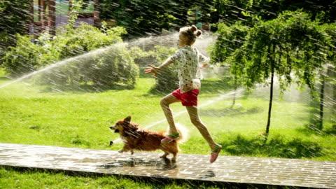 vidéos et rushes de fille d'enfant jouant avec le chien à la pelouse de parc avec des arroseurs versants - format hd