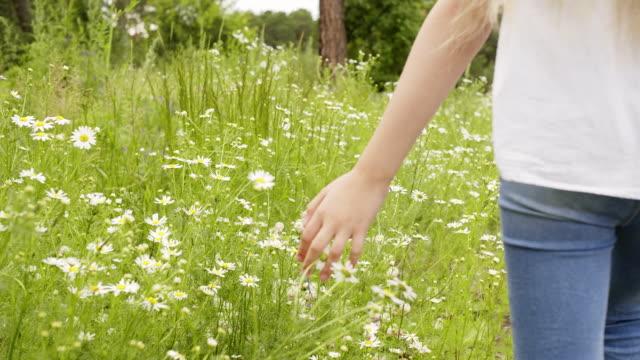 vídeos y material grabado en eventos de stock de niña camina a través de la pradera y tocando gamuzas, las manos primer plano. - manzanilla