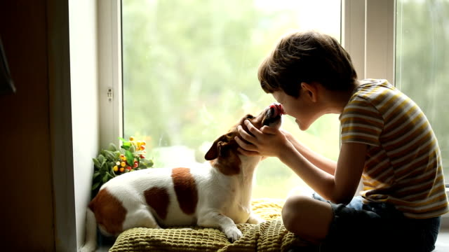 child kisses his dog friend in nos. - neonati maschi video stock e b–roll