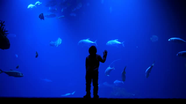 child learns world, silhouette of a kid watching incide of huge aquarium full of exotic fish in oceanarium - океанариум стоковые видео и кадры b-roll