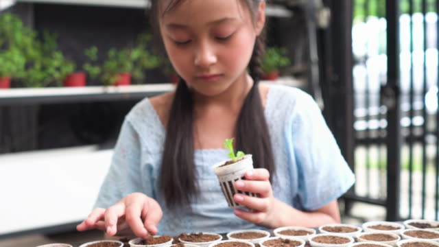 child planting hydroponic sprout into new plastic pot - gardino video stock e b–roll