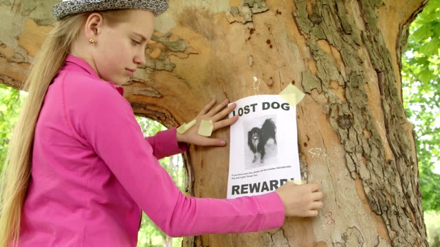 Child posting lost pet sign on on tree trunk Child posting lost pet sign with dog image on on tree trunk lost stock videos & royalty-free footage