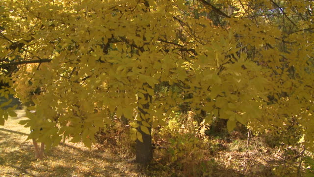Child swings in Autumn leaves video