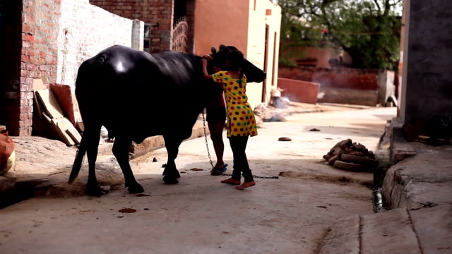 Child taking back home his buffalo after bathing in pond
