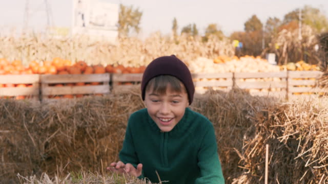 Child to playing tag while pumpkin harvest