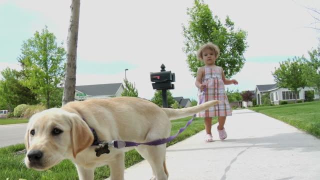 kind zu fuß hund 4 - hundesitter stock-videos und b-roll-filmmaterial