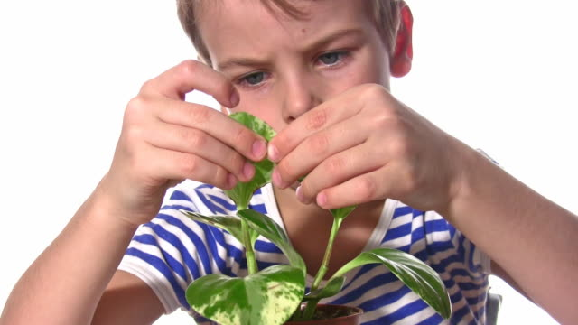 Child with plant video