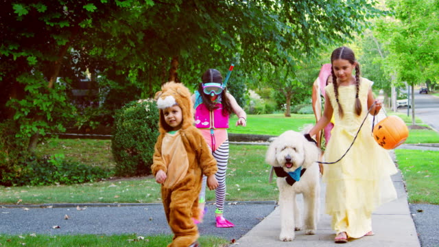 vídeos de stock e filmes b-roll de children and dog in halloween costumes for trick or treating - halloween