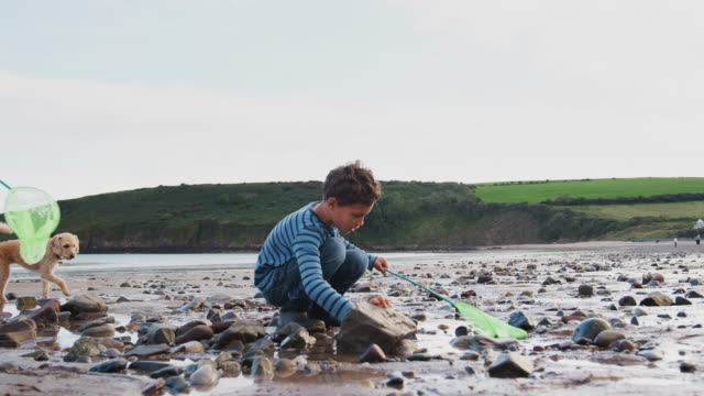 Children and pet dog with fishing net exploring rockpools on beach on winter vacation - shot in slow motion Children With Pet Dog Looking In Rockpools On Winter Beach Vacation coastal feature stock videos & royalty-free footage