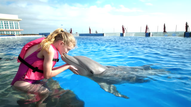 Children and trainer in water, girls kisses dolphin A multi-ethnic group of children on a field trip to a marine education park. They are standing waist deep in water with an animal trainer, interacting with a bottle-nosed dolphin. The trainer, a mid adult woman in her 30s, helps a 12 year old girl kiss the dolphin. dolphin stock videos & royalty-free footage