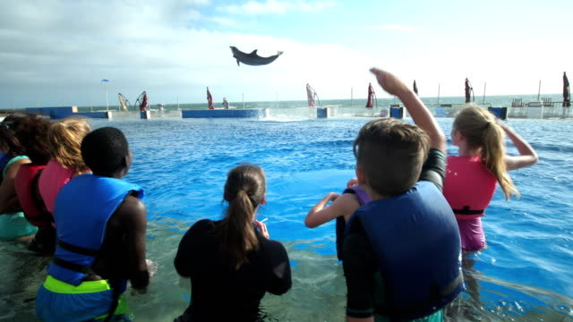Children and trainer in water watching dolphin leap high A multi-ethnic group of seven children, boys and girls 11 to 13 years old, on a field trip to a marine education park. They are standing waist deep in water with an animal trainer, watching as a bottle-nosed dolphin leaps high up in the air, twice. dolphin stock videos & royalty-free footage