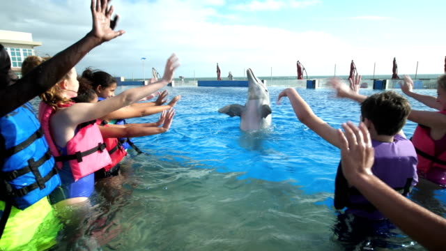 Children and trainer in water with dolphin, waving A multi-ethnic group of seven children, boys and girls 11 to 13 years old, on a field trip to a marine education park. They are standing waist deep in water with an animal trainer, interacting with a bottle-nosed dolphin. They are waving at him and he waves back. dolphin stock videos & royalty-free footage