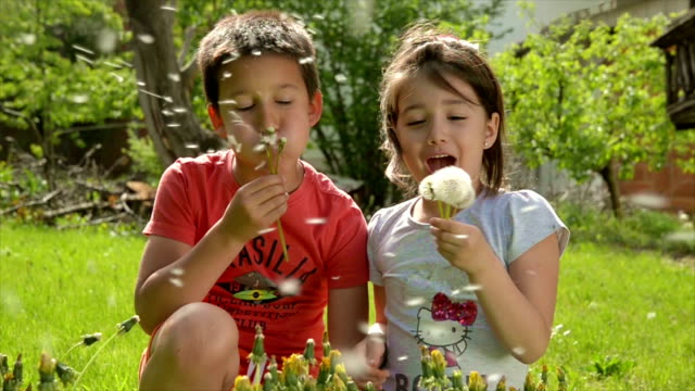 Children are having fun while blowing dandelion video