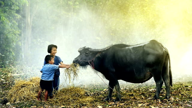Children feeding buffalo