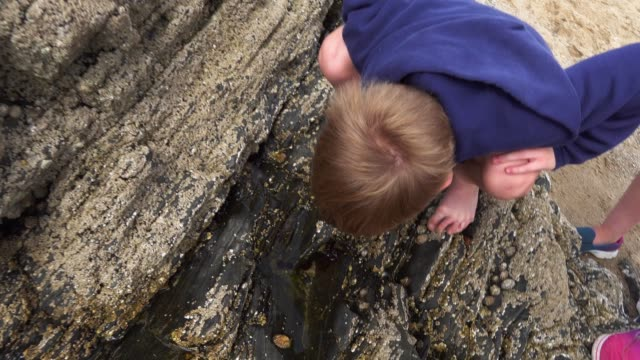 children investigating a rock pool - crostaceo video stock e b–roll