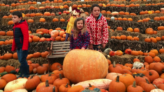 Children looking at a variety of pumpkins for Halloween video