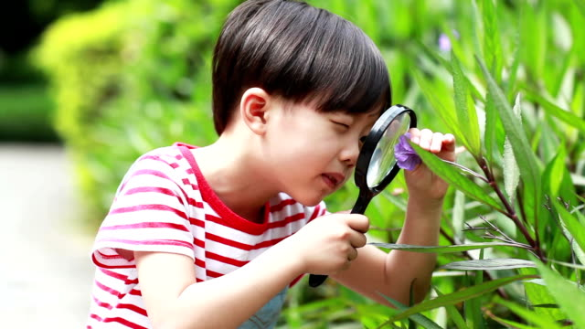 Children play with a magnifying glass Children play with a magnifying glass magnifying glass stock videos & royalty-free footage