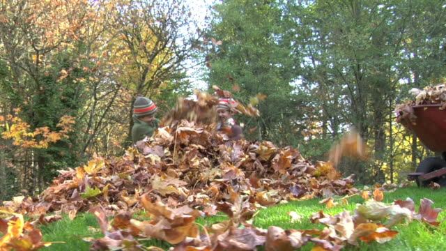 Children playing in leaves video