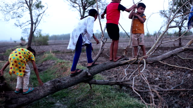 Children playing with fallen tree video