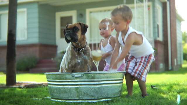 Children washing dog video