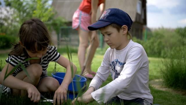 children work in the garden, cut grass in the garden video