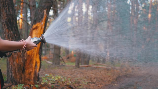 Children's Female Hands Hold Fire Hose from Which Water Runs in Pine Forest