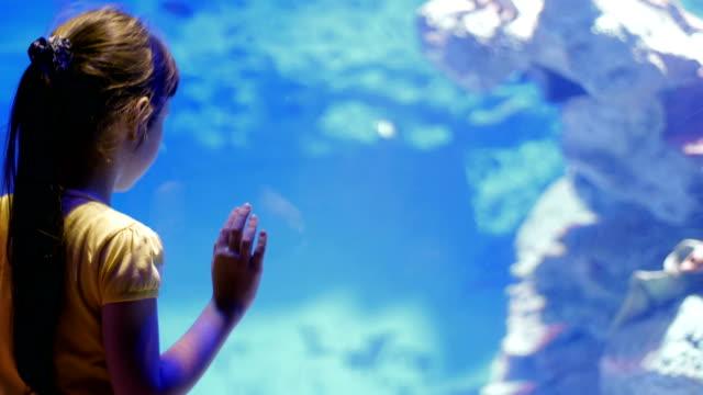 vidéos et rushes de impressions de l'enfance du monde sous-marin et de ses habitants - zoo