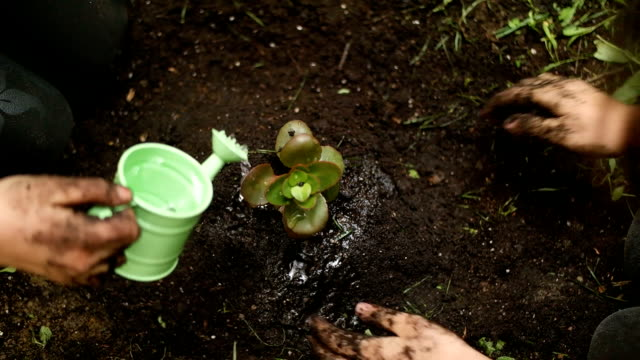 Child's cares for plants video