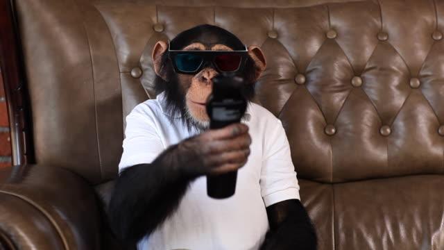 vídeos de stock, filmes e b-roll de chimpanzé tv 3d de vermelho e azul - macaco