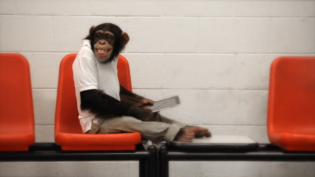 chimp casual wi-fi - monkey stock videos and b-roll footage
