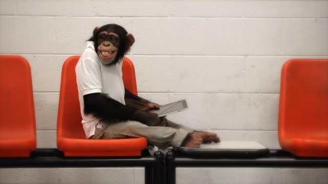 vídeos de stock, filmes e b-roll de chimpanzé casual wi-fi gratuito - macaco