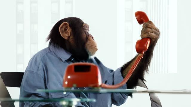 Chimp Help Line video