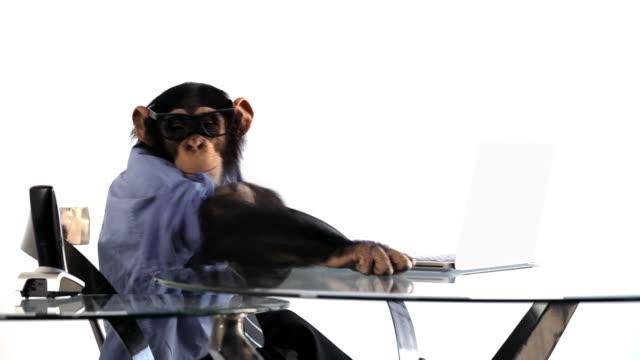 vídeos de stock, filmes e b-roll de chimpanzé laptop navegação - macaco