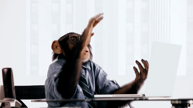 Chimpanzé Laptop Clapping - vídeo