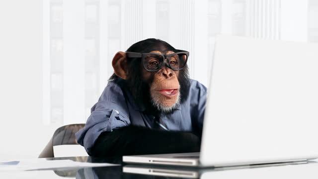 chimp connessione per computer portatile - scimmia video stock e b–roll