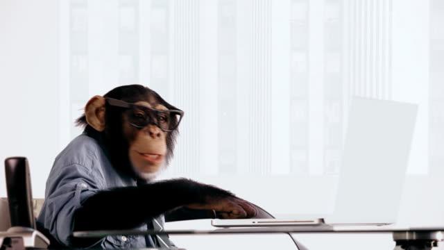 Chimp Laptop Happy video