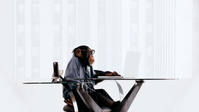 vídeos de stock, filmes e b-roll de chimpanzé laptop - macaco
