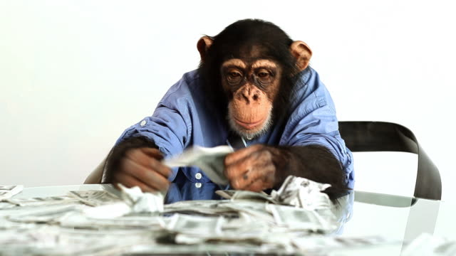 stockvideo's en b-roll-footage met chimp money counting - mensaap