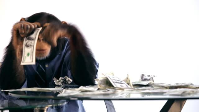 vídeos de stock, filmes e b-roll de chimpanzé dinheiro mesa - macaco