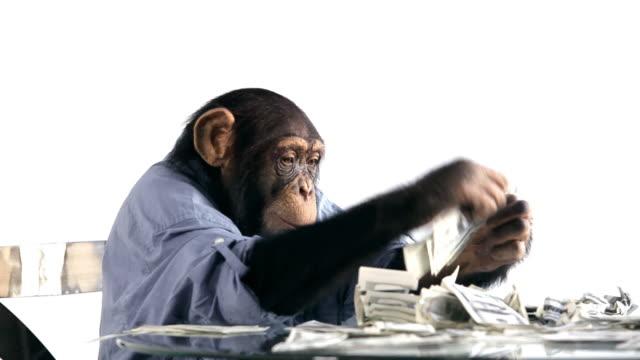 chimp risparmio di denaro - scimmia video stock e b–roll