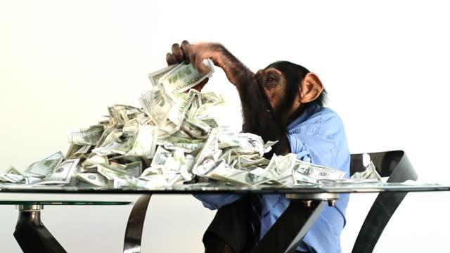 stockvideo's en b-roll-footage met chimp money stacking - mensaap