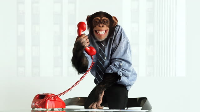 stockvideo's en b-roll-footage met chimp phone laughing - mensaap