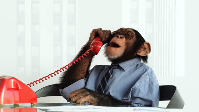 Chimp Phone Service video