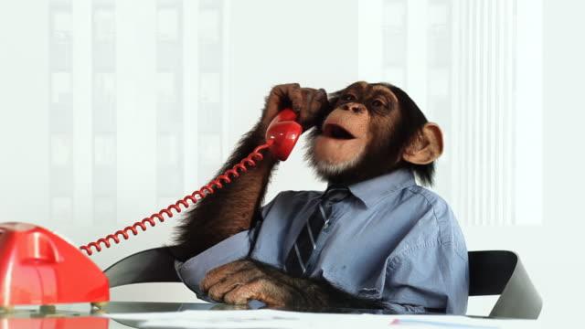 vídeos de stock, filmes e b-roll de chimpanzé serviço de telefone - macaco