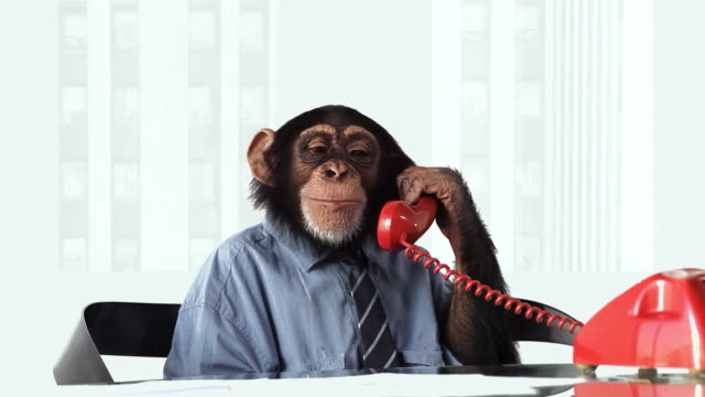 chimp telefono sorridente - scimmia video stock e b–roll