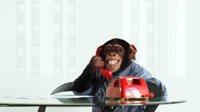 vídeos de stock, filmes e b-roll de chimpanzé telefone vermelho - macaco